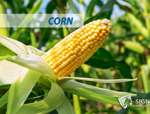 Corn Emerging Seasonal Trend