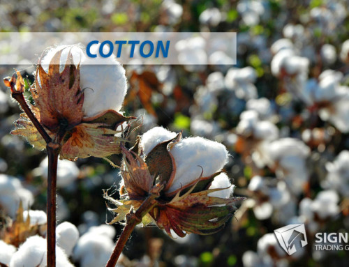 Cotton Due for a Move