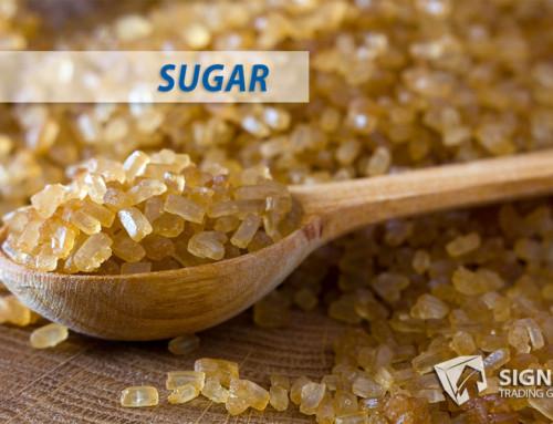 Sugar Seasonal Pivot Top