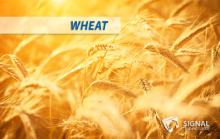 Wheat trading signals