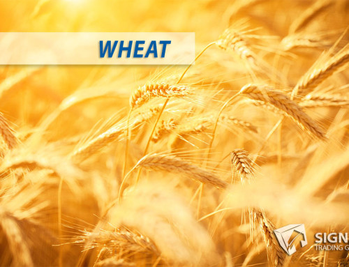 Wheat Extended Consolidation